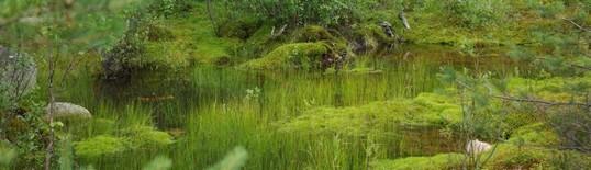 Болота и водный мир Карелии