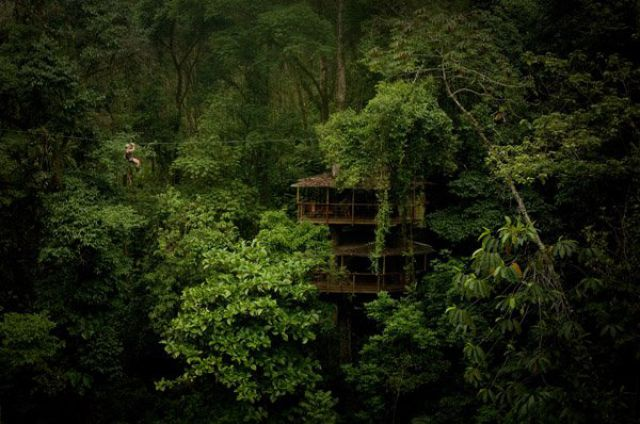 Дома на деревьях, необычные дома