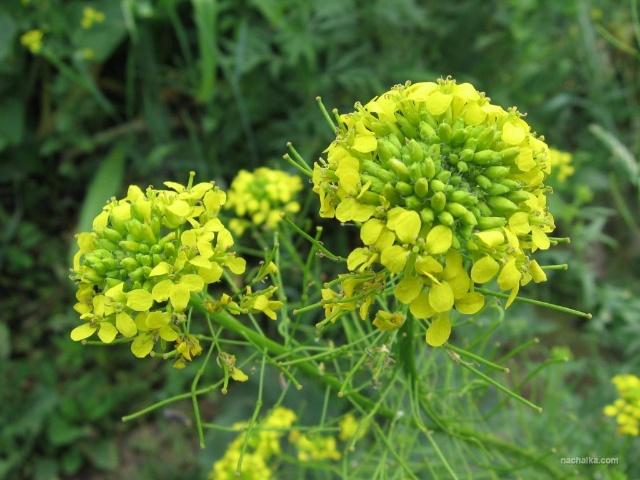 Лекарственные растения в отшельничестве