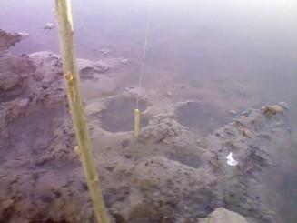 Особенности рыбалки на карася, или как заставить карася клевать когда он не клюёт