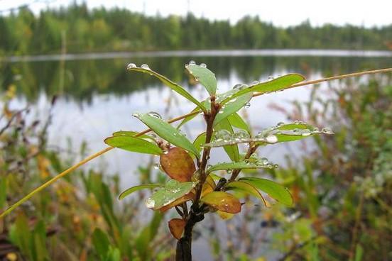 Растительный мир Карелии